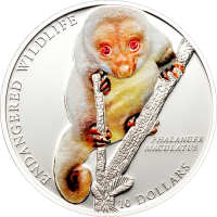 Common Spotted Cuscus Ag