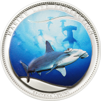 Scalloped Hammerhead – Silver