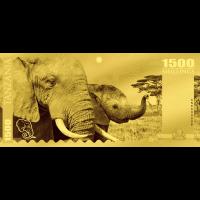 Elephant – Tanzania