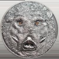 Wild Boar – Sus scrofa