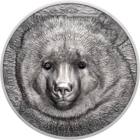 Mongolian Gobi Bear